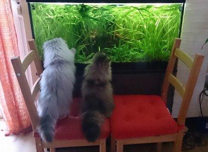 CatTV